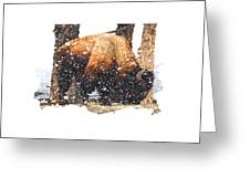 The Majestic Bison Greeting Card