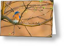 The Male Eastern Bluebird Greeting Card