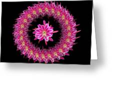 The Mandala Of Pink Tropical Flower Greeting Card by Jacqueline Migell