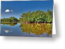 The Mangrove Coast Greeting Card