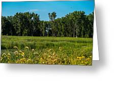 The Marsh  Greeting Card
