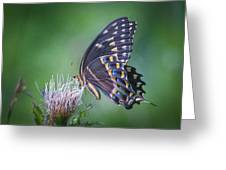 The Mattamuskeet Butterfly Greeting Card by Cindy Lark Hartman