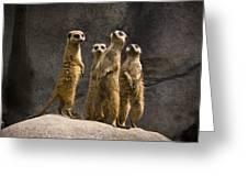 The Meerkat Four Greeting Card