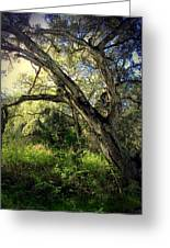 The Mighty Oaks Of Garland Ranch Park 1 Greeting Card