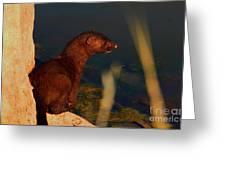 The Mink Greeting Card