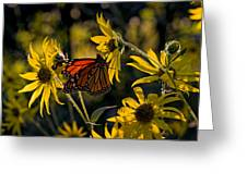 The Monarch And The Sunflower Greeting Card