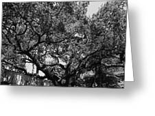 The Monastery Tree Greeting Card