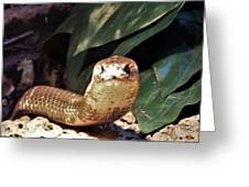 The Monocled Cobra Greeting Card