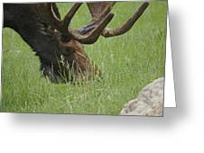 The Moose Greeting Card