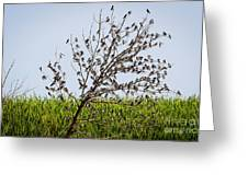 The More The Merrier- Tree Swallows  Greeting Card