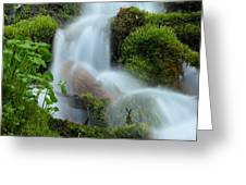 The Mossy Mist Greeting Card