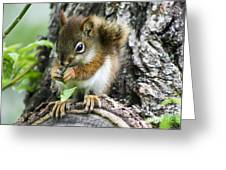 The Most Adorable Baby Squirrel Greeting Card