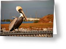 The Most Beautiful Pelican Greeting Card by Susanne Van Hulst