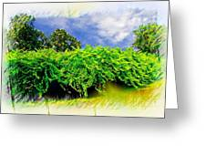 The Mother Vine - Roanoke Island, Nc Greeting Card