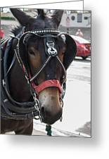 The Mule That Poses Greeting Card