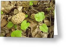 The Mushroom Trio Greeting Card