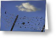 The Musical Barbed Wire Birds Greeting Card