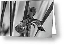 The Mystery Of Spring 2 Bw Greeting Card