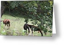 The Neighbors Horses Greeting Card