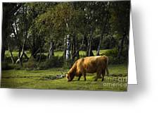 the New forest creatures Greeting Card