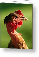The Noble Transylvanian Naked Neck Chicken In Profile Greeting Card