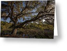 The Oak By The Side Of The Road Greeting Card