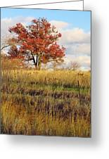 Red Oak Under November Skies Greeting Card by Lori Frisch