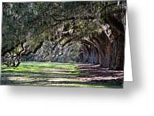 The Oaks At Boone Hall Greeting Card
