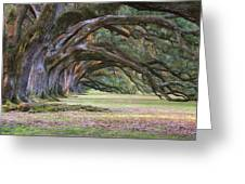 The Oaks Of Oak Alley Plantation Greeting Card