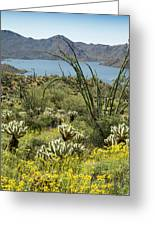 The Ocotillo View Greeting Card