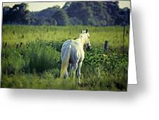 The Old Grey Mare Greeting Card