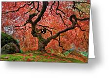 The Old Japanese Maple Tree In Autumn Greeting Card