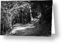 The Old Logging Road Greeting Card