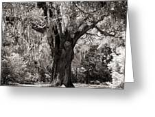 The Old Oak Is Still Standing Greeting Card