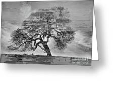 The Old Oak Tree Standing Alone  Greeting Card