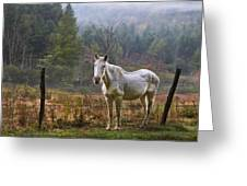 The Olde Gray Horse Greeting Card by Ken Barrett