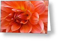 The Opening Of A Dahlia Greeting Card