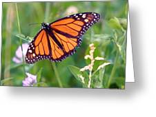 The Orange Butterfly Greeting Card