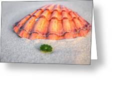 The Orange Scallop Greeting Card