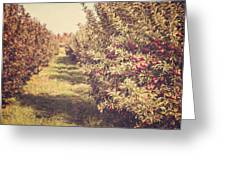 The Orchard Greeting Card by Lisa Russo