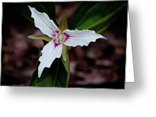 The Painted Trillium Greeting Card