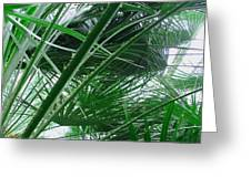 The Palm House Kew England Greeting Card