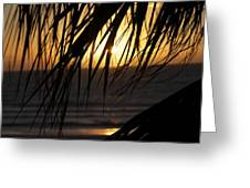 The Palm Tree In The Sunset Greeting Card by Danielle Allard