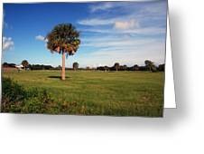 The Palmetto Tree Greeting Card