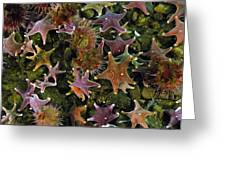 The Parade Of Stars Greeting Card