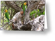 The Parrot Argument Greeting Card