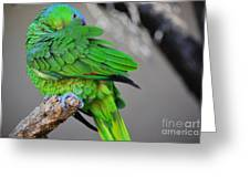 The Parrot Greeting Card
