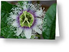 The Passionfruit Flower Greeting Card