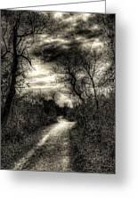 The Path Seldom Taken Greeting Card