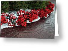The Path To Christmas - Poinsettias, Trees, Snow, And Walkway Greeting Card
